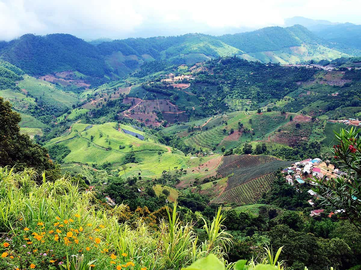 Motañas verdes - Ban Ho Mae Salong - Que hacer en Chiang Rai