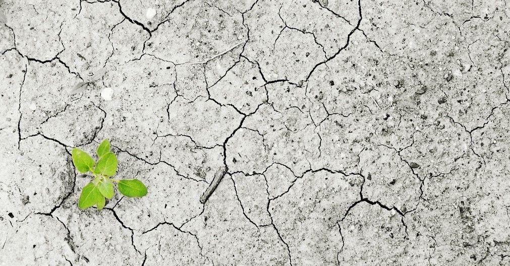 El mundo vuelve a perder la batalla contra el hambre (por culpa de la humanidad)