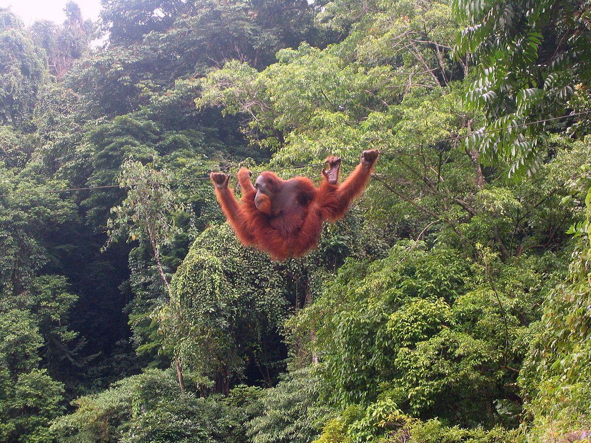 Qué hacer en Sumatra