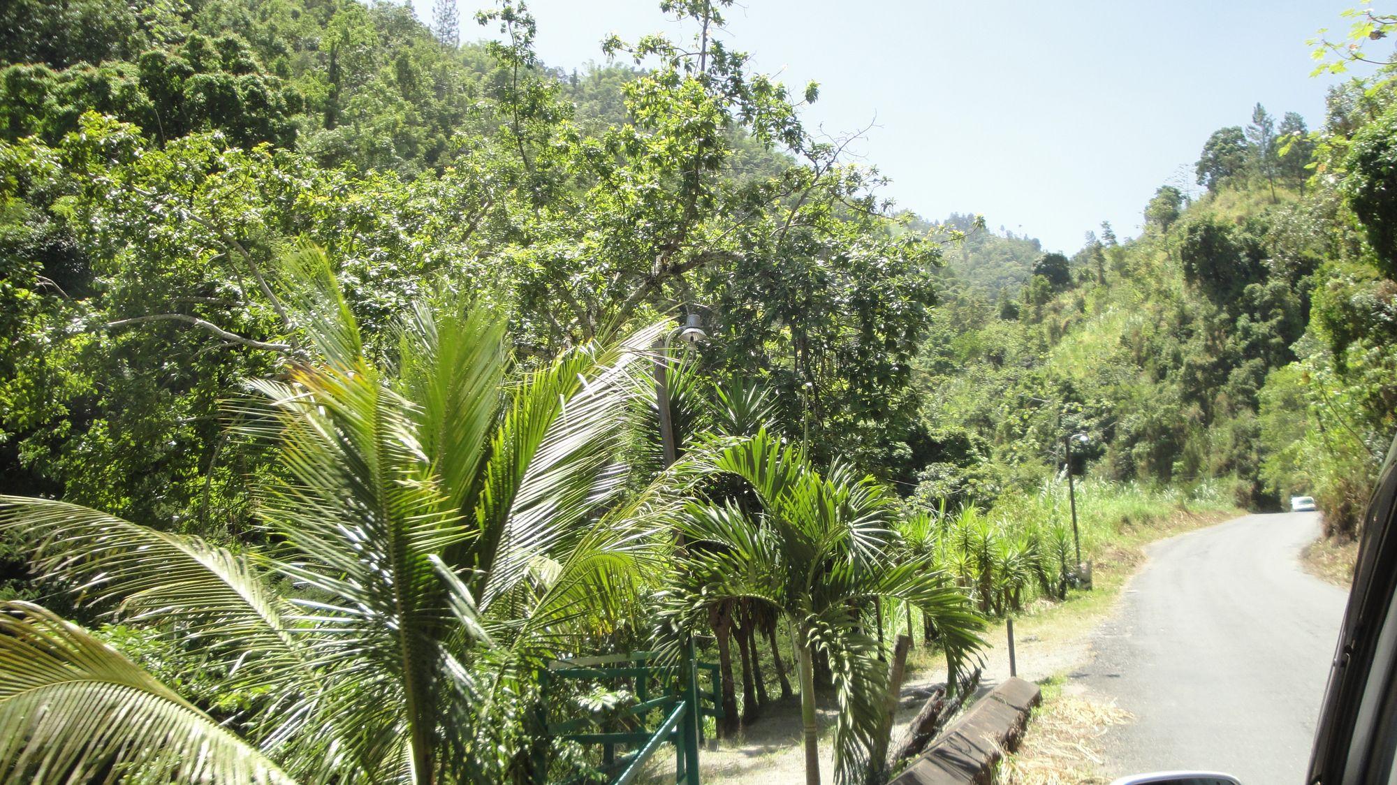 Ascendiendo las Blue Mountains es Kingston Jamaica
