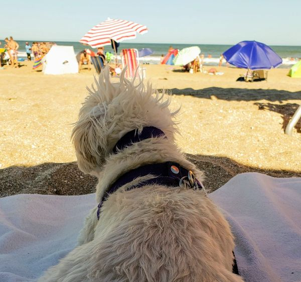 Las Gaviotas, balneario pet friendly